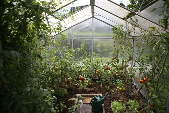 économie arrosage jardin